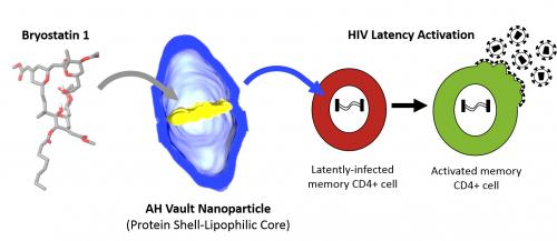 Vault nanoparticles show promise for cancer treatment and possible HIV cure