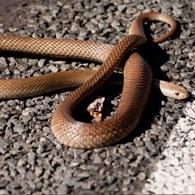 Vet's warning over waking snakes