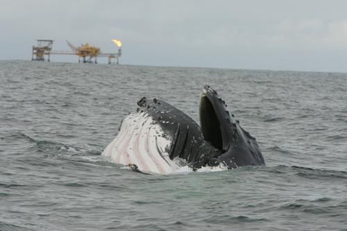 Whales and human-related activities overlap in African waters
