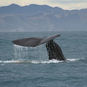 Whale watching book questions industry sustainability