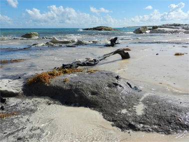 The Gilpin Point peat, Abaco Island, The Bahamas, is only exposed during extremely low tides. Credit: Nancy Albury