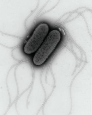 What fuels Salmonella's invasion strategy?