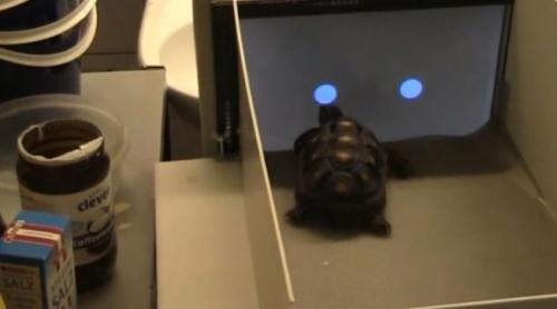 Tortoises master touchscreen technology (w/ Video)