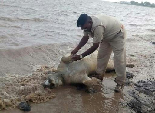 essays on floods in india