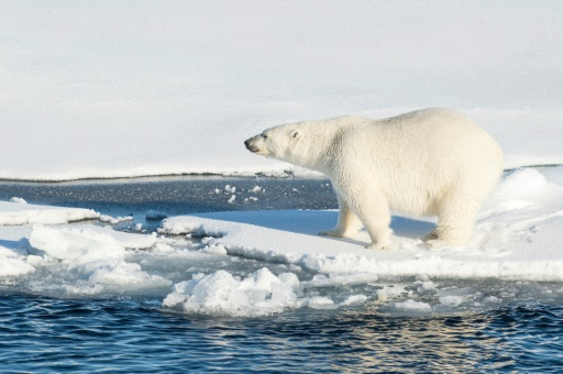 how to stop arctic ice from melting