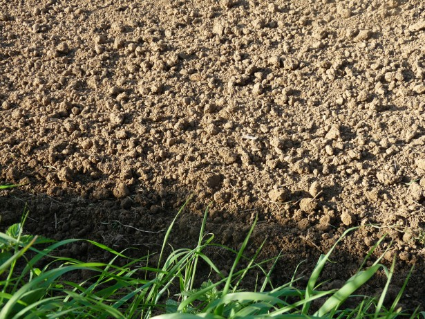 Losses of soil carbon under global warming might equal US emissions