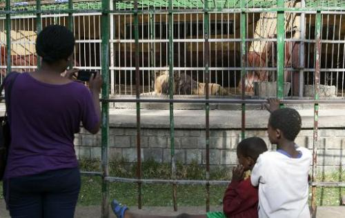 Visitors take pictures of lions at a zoo in Addis Ababa