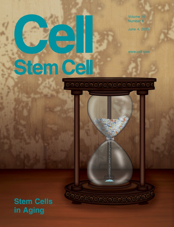What are you reasons for not supporting stem cell research? Please explain.?