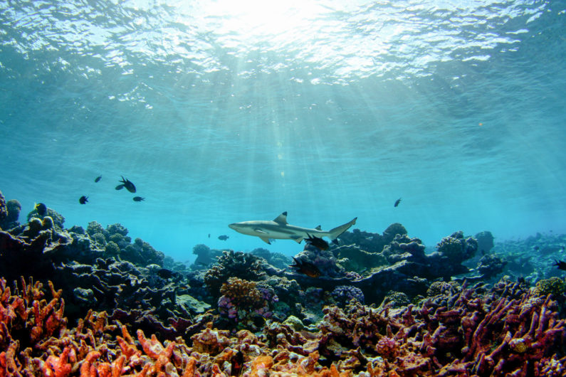 how coral reefs come about The odds seem good for 2014 to be only the third recorded global scale mass  bleaching, says mark eakin, coordinator of the coral reef.