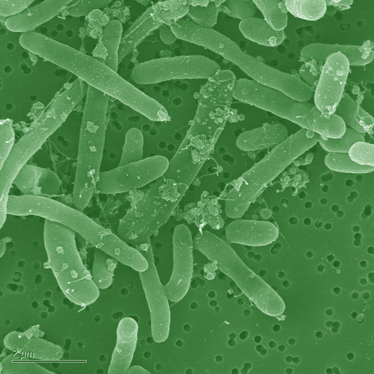 E. coli fatty acid biosynthesis system could more efficiently convert biomass to desired products