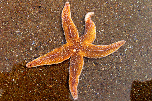 as being particularly fast,? says Eric Littman, ?but sea stars ...
