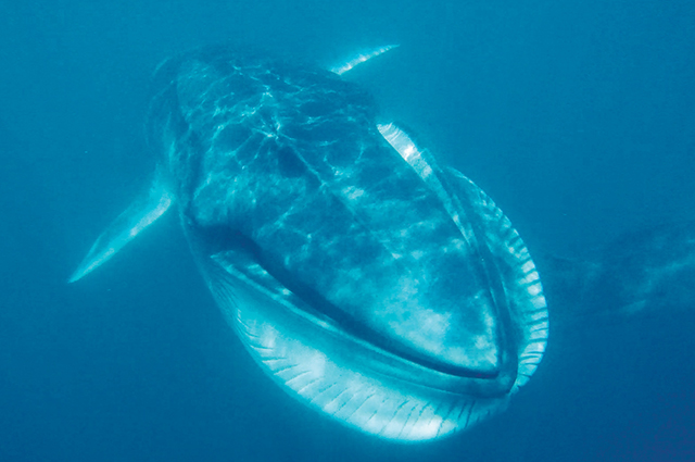 How a researcher discovered a completely undocumented whale
