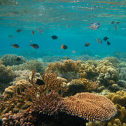 Effects of El Nino land South Pacific reef fish in hot water
