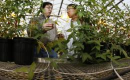Gene discovery may lead to new varieties of soybean plants