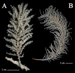New species of invertebrates discovered in the Antarctic
