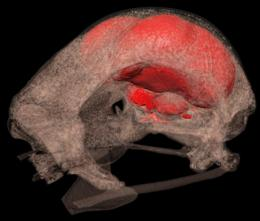 3D X-rays piece together the evolution of flight from fossils