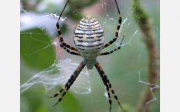 Scientists untangle spider web stickiness