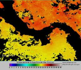 Smithsonian reports regional sea temperature rise and coral bleaching event in Western Caribbean