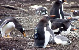 How seabirds share their habitat