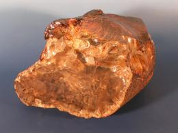 Scientists describe  first Cretaceous African amber deposit