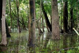 German research protects the Amazon rainforest
