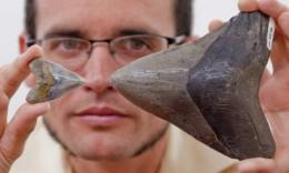 Scientists discover megalodon shark nursery