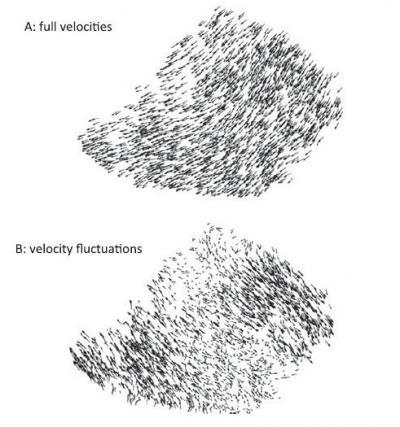Starling flocks fly like a single entity
