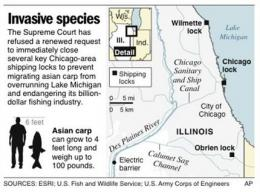 6-week search finds no Asian carp near Chicago (AP)