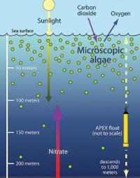 Researchers discover source of essential nutrients for mid-ocean algae