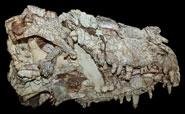 Rainforest collapse drove reptile evolution