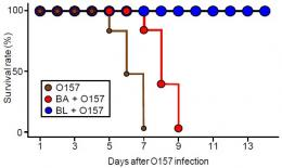 Discovery of 'probiotic transporters' unlocks secrets of infection-preventive bifidobacteria