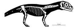 Oldest dinosaur embryos give insights into infancy and growth