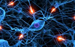 Activity of a Single Brain Cell Can Predict if We Spend or Save