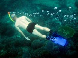 A diver of the nature Conservancy inspect coral at Nusa Penida sea in Klungkung, Bali island