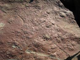 Ancient reptiles 'make tracks'
