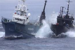 Anti-whalers, Japanese fleet fire water cannons (AP)