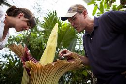 A rare rainforest plant blooms at Harvard