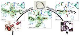 Artificial metalloenzymes, the chemical synthesis of the future