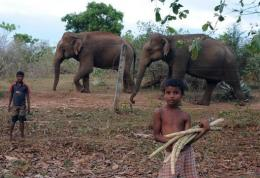A Sri Lankan child waits for customers for his sugar cane to feed elephants at the elephant sanctuary in Udawalawe