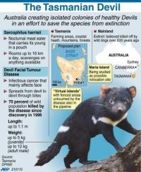 Australia is creating isolated colonies of healthy Devils in an effort to save the species