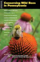 Bee research shows benefits of native plants, wild bees