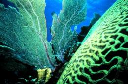 Caribbean coral reef protection efforts miss the mark