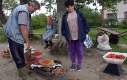 Chernobyl soil blamed for lung problems in children