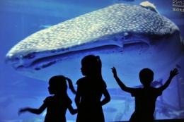 Children watch the giant image of a whale shark on a huge screen in Tokyo