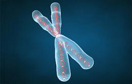Chromosome's Guardians Susceptible to UV Radiation, Scientists Find