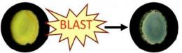 Color-changing 'blast badge' detects exposure to explosive shock waves