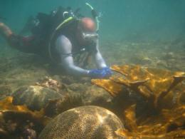 Coral off Puerto Rico's coast 'ideal case study' for Gulf oil spill's impact