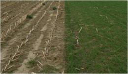Cover crops reduce erosion, runoff