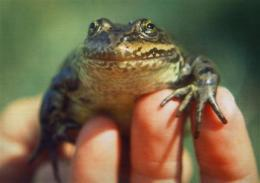 Critics say Obama lagging on endangered species (AP)