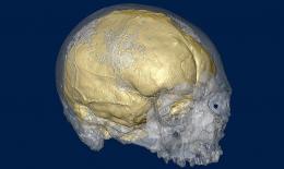 Cro Magnon brain